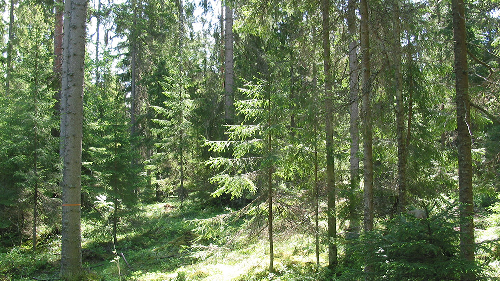 Luonto-mallia-lm-w1000-16-9